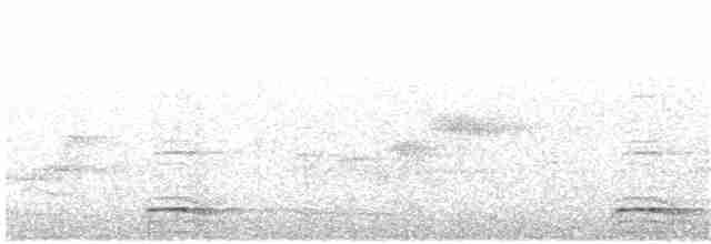 Highland Tinamou - Edwin Munera