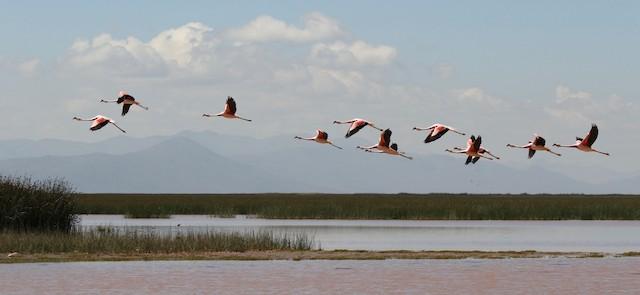 Example habitat: Oruro, Bolivia.
