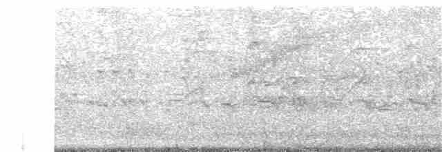 Black-bellied Whistling-Duck - Daniel Garrigues