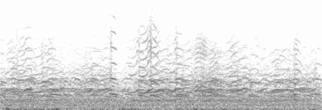 Cackling Goose (Aleutian) - James Holmes
