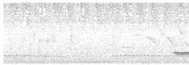Small-billed Tinamou - Carlos Gussoni