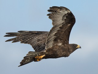 Gal/ápagos Diary A Complete Guide to the Archipelagos Birdlife