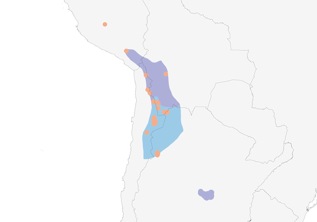 Distribution of the Andean Flamingo