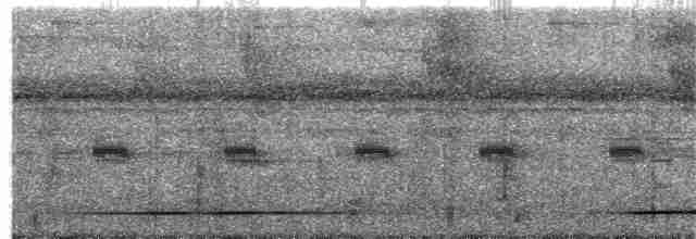 White-throated Tinamou - Dusan Brinkhuizen
