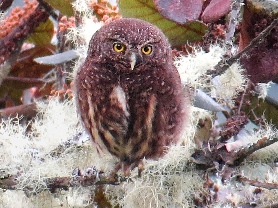 owl portal loma linda