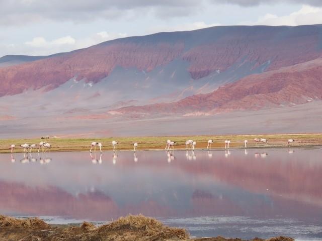 Example habitat: Catamarca, Argentina.