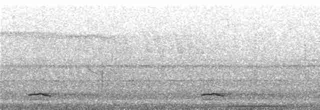 Highland Tinamou (South American) - Niels Krabbe
