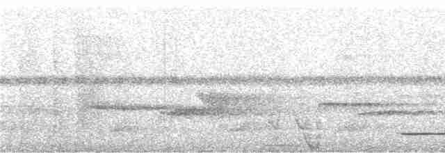 Gray Tinamou - Niels Krabbe