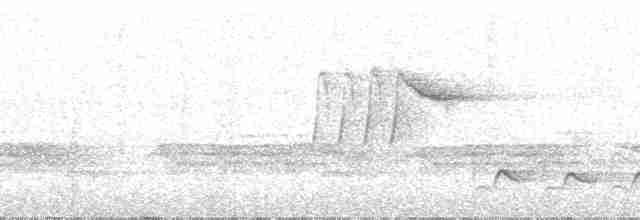 White-breasted Wood-Wren (Black-capped)