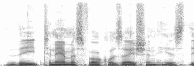Gray Tinamou - Tom Schulenberg