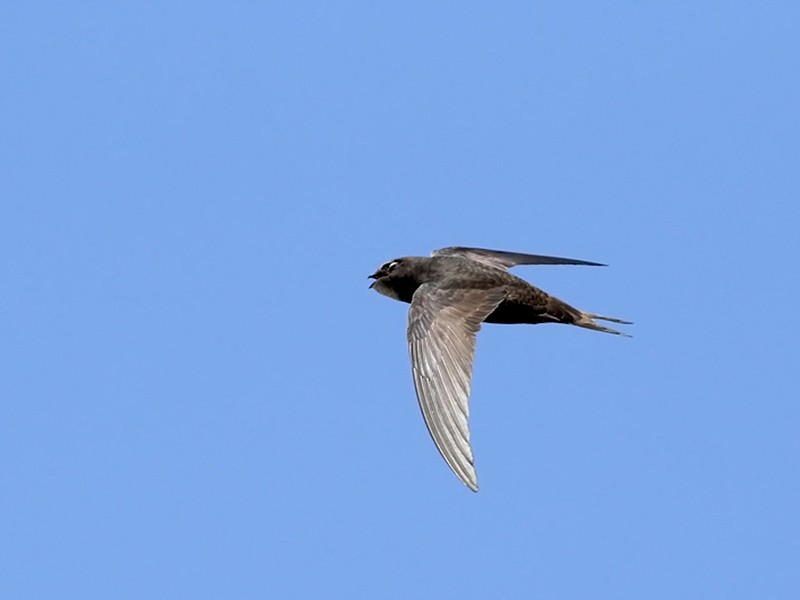 Common Swift - Adrien Mauss