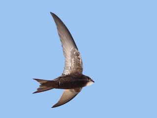 - Common Swift