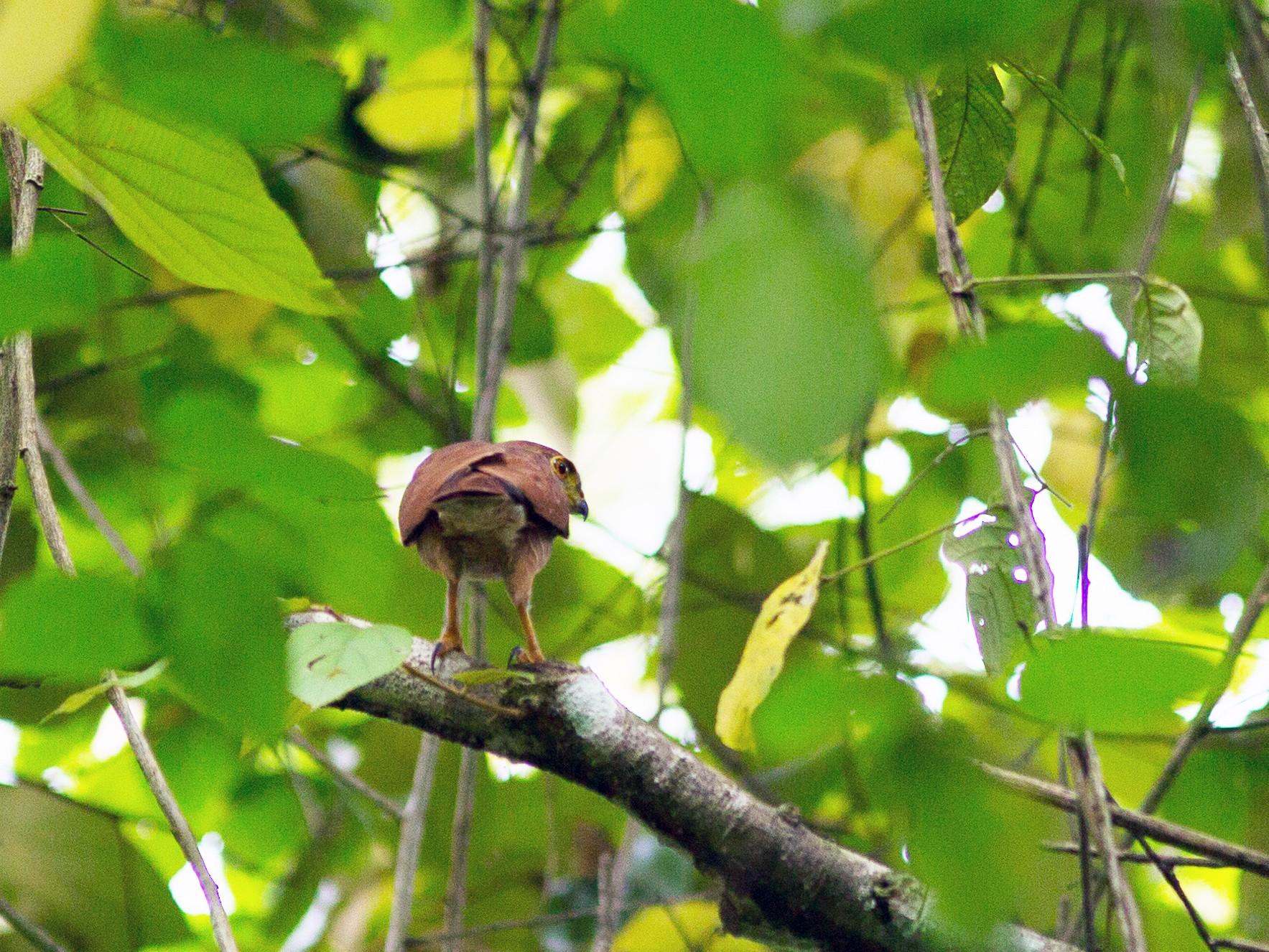 Tiny Hawk - David Disher