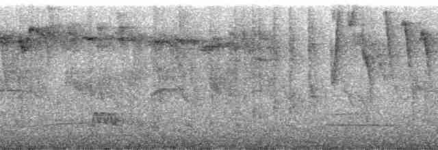 Tawny-breasted Tinamou - Mark Robbins