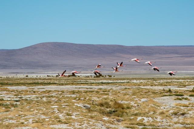 Example habitat: Tarapacá, Chile.