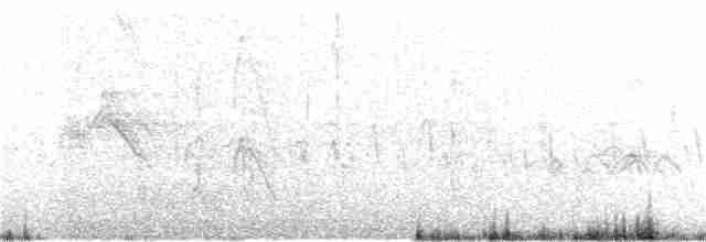 Plumed Whistling-Duck - Kath Shurcliff