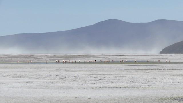 Example habitat: Arica y Parinacota, Chile.