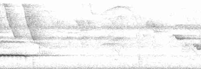 Little Tinamou - Paul A. Schwartz