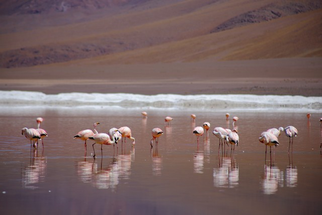 Example habitat: Potosí, Bolivia.